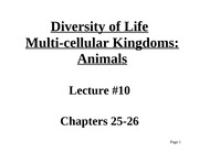 Lecture #10- Animal Kingdom