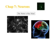 100_Chap7_Sum10_Neurons