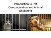 ANSC 250 Pet Overpopulation and Animal Sheltering