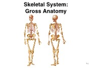 9 - Bone Gross Anatomy - Axial Skeleton