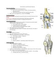 7 Knee Structure and Functional Anatomy