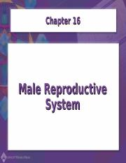 Chapter16-Male Reproductive