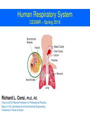 Human Respiratory System - Slides - CE369R_Sp2016-2