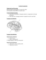 PSYCH 207 Cerebral Asymmetries Notes