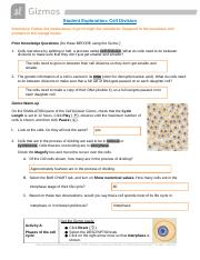 GIZMO. Cell Division finished copy.docx - Student ...
