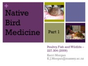 227.304%20Native%20Bird%20Medicine%20I%20(2009)