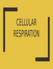 2.8 Cell Respiration.pptx