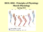 09 10  Muscle Contraction I and II