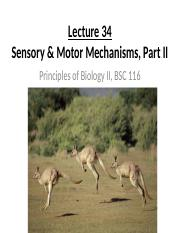 Lecture_34_sensory_motor_mechanisms_2_2016.pptx