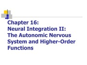 Chapter 16 - Neural Integration - Notes