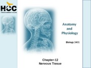 Chapter_12_Neural_Tissue
