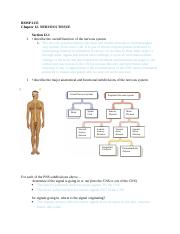 Chapter 12 Review Anatomy