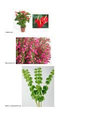 feature flowers exam 2.docx