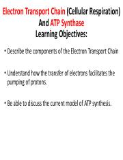 22 ETC and ATP synthase.pdf