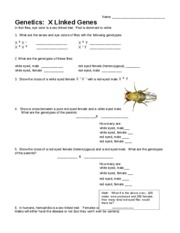 Sex-Linked Traits Worksheet F09 - Sex-Linked Traits ...
