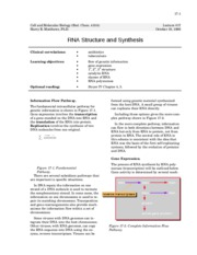 RNA structure and synthesis - 17