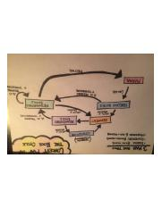 Concept Map: Rock Cycle