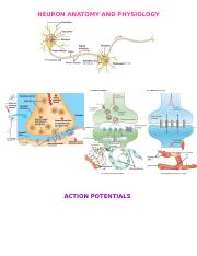 NEURON ANATOMY AND PHYSIOLOGY.docx
