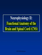 Lecture 3-Neurophysiology II