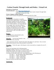 Carbon Transfer Through Snails and Elodea