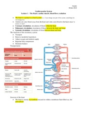 Notes on Cadiovascular System