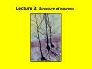 (3) Structure of the neuron.ppt