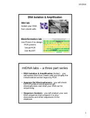 FOR STUDENT UPLOAD Lab E -  DNA Isolation  Amplification - TA presentation - LNL.pdf