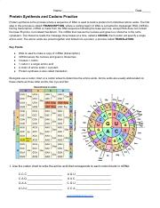 Protein Synthesis and Codons Practice.pdf - Name Date ...