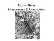 10-11-06 (13) Extracellular