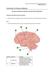 Nervous and Endocrine Systems and the Senses Worksheet