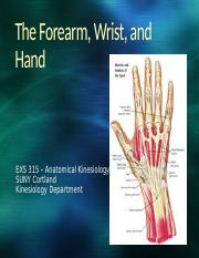 EXS 315 - Unit #7 - The Forearm, Wrist & Hand-17-BLACKBOARD (1)