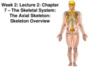 Z331 Fall 2010 Ecampus Week 2 Lecture 2 Skeleton Overview Posted
