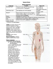 Immune System notes