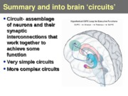 Lecture 13- brain circuitry