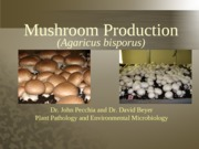 Mushroom_Production_Lecture