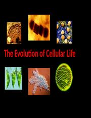 EvolutionOfCellularLifePre-to-PostCambrian.ppt