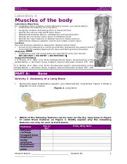 HBIA 2015 - Lab 4 Muscles of the body.docx