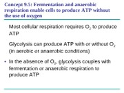 19_CellularRespiration3