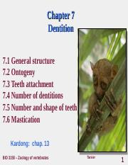 chapter7_dentition