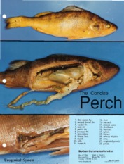 Perch_Dissection.pdf