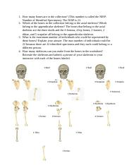01.05 The Human Skeleton