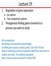 Lect 19 Regulation and mutagenesis