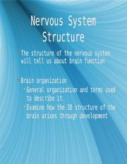 Nervous System Structure 13