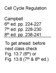 Lecture 23 Cell Cycle Regulation Slides