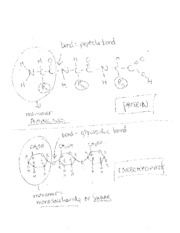 macromolecule structures - names of group, monomer and bonds