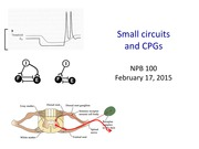 NPB100+11+small+circuits+and+CPGs+CLASS (1)