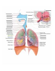 week 5 Respiratory System Lab Exercise_ADA_Page_1.jpg