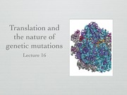 Lecture 16 Translation and types of mutations (1)