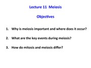 234 PreLecture 11 meiosis and chromosomes