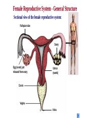 reproductive organs.pptx